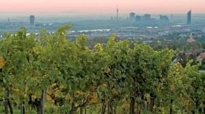 Wiener Wein 2 Copyright WienTourismus Lois Lammerhuber