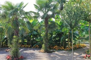 Palms in Vienna